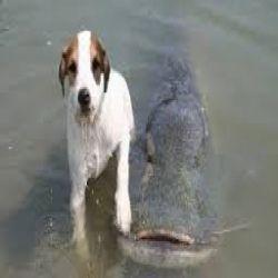 شاهد كلب يمسك سمك السلور