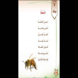 نشيد النحلة الصف الأول الفصل الدراسي الثاني